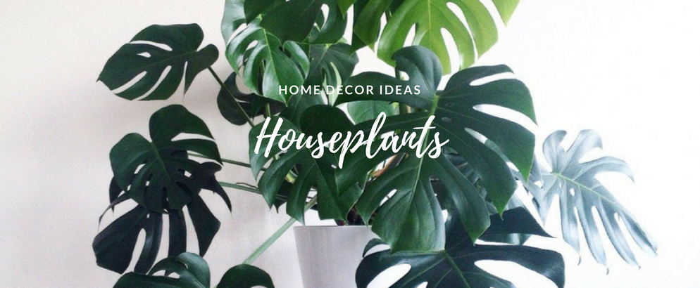 Summer Home Hack- The Houseplants That'll Change the Game_1 summer home Summer Home Hack: The Houseplants That'll Change the Game Summer Home Hack The Houseplants Thatll Change the Game feat 994x410