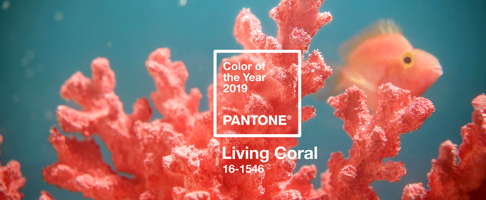 Announcing The Amazing Pantone Color Of The Year 2019! pantone color of the year 2019 Announcing The Amazing Pantone Color Of The Year 2019! Announcing The Amazing Pantone Color Of The Year 2019 feat 1 994x410